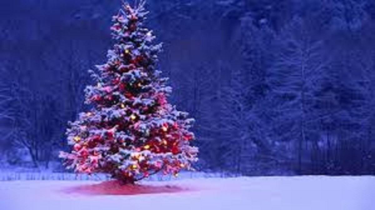 Čestit Božić i sretna Nova Godina !!!